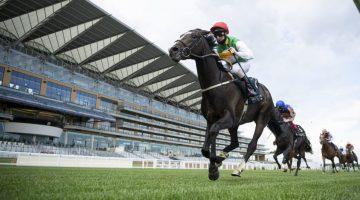 Pyledriver is a Derby betting long shot fancy