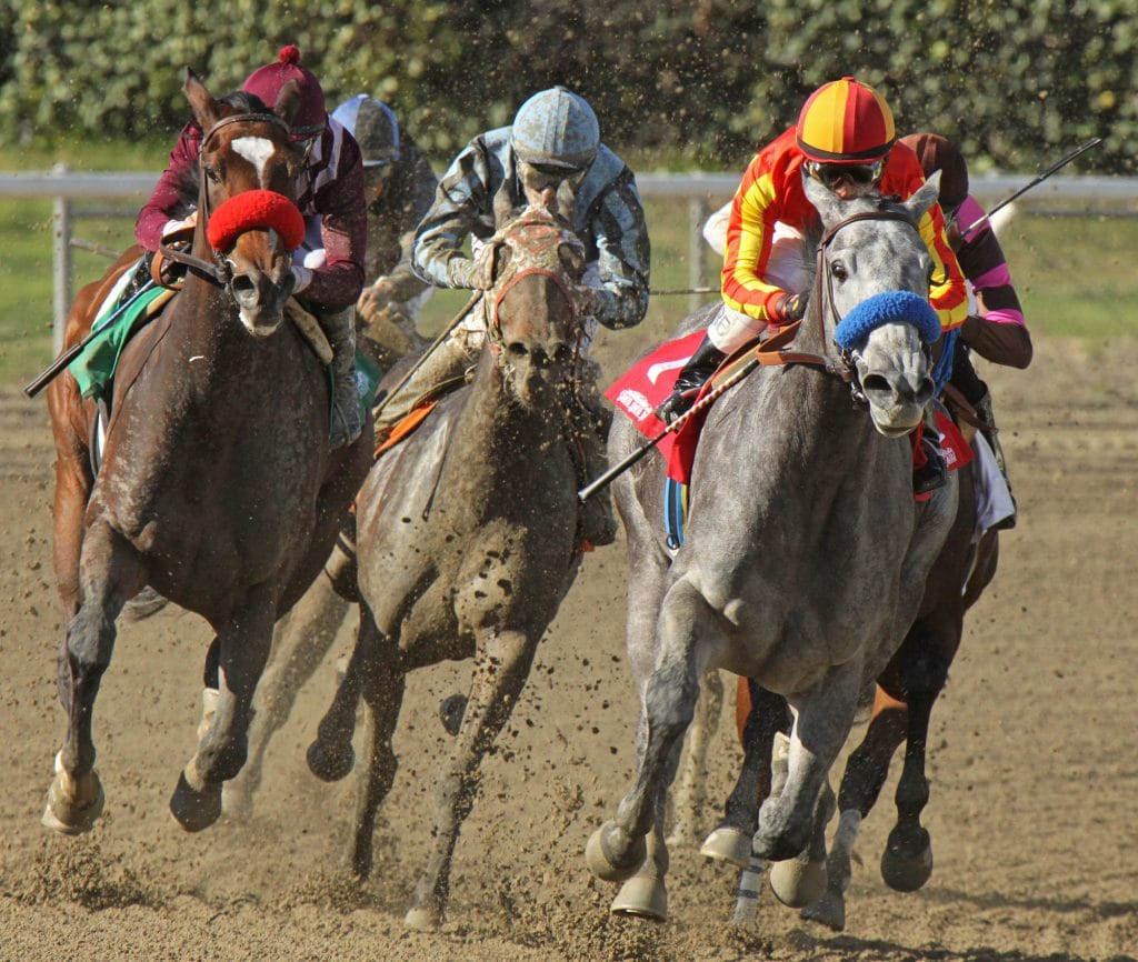 Which Bookmakers Pay First Past the Post
